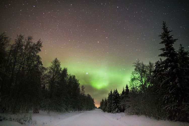 Horizon of north Snow Tree Winter Beauty In Nature Night Tranquility Sky Tranquil Scene Space Astronomy Star - Space No People Nature Outdoors Aurora Borealis Northern Lights Travel Landscape Scenics Check This Out EyeEm Best Shots Freshness Green Color Hello World Winter