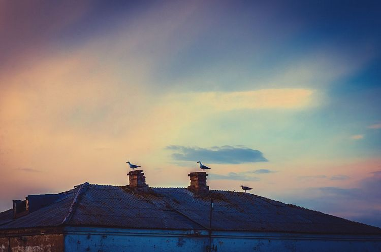 """""""Don't let the sun go down when you're still angry."""" Seagulls Birds Perched Birds Perched Chimney Old House Rooftop Evening Light Evening Sky Sky Dusk Sky Dusk Colours Animals Clouds Old Building  Old House Moody Moody Sky Gulls Perching Harmony With Nature Harmony Animals Silhouette Tranquility"""
