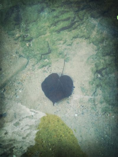 ธรรมชาติก็มีหัวใจ