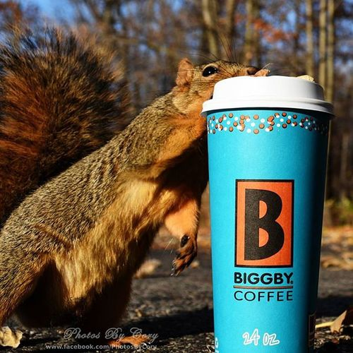 If you order a nutty mocha carmel Don't leave it unattended.. Biggbyleonardfuller Biggbycoffee  Coffee Coffeeordeath Nocoffeenowork Nocoffeenoworkie Funwiththesquirrels Luckywiththeanimals Wildlife Animallover Wildlifephotography Wildlifepark Photooftheday Instadaily Instanature Natureshots Natureseeker Natureonly Natures_hub Natures_cuties Animallover Animal_captures Wildlife_perfection