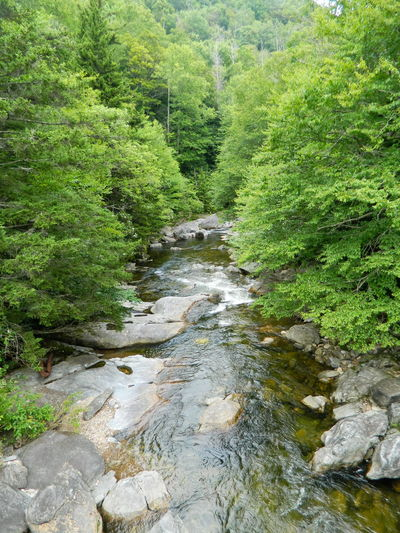 Tranquil Stream Beauty In Nature Blue Ridge Parkway Blue Sky Day Eco Tourism Forest Freshness Green Color Landscape Lush - Description Lush Foliage Nature No People Non-urban Scene Outdoors Parkway Ravine River Rock - Object Scenics Tranquil Scene Tranquility Tree Water Wilderness