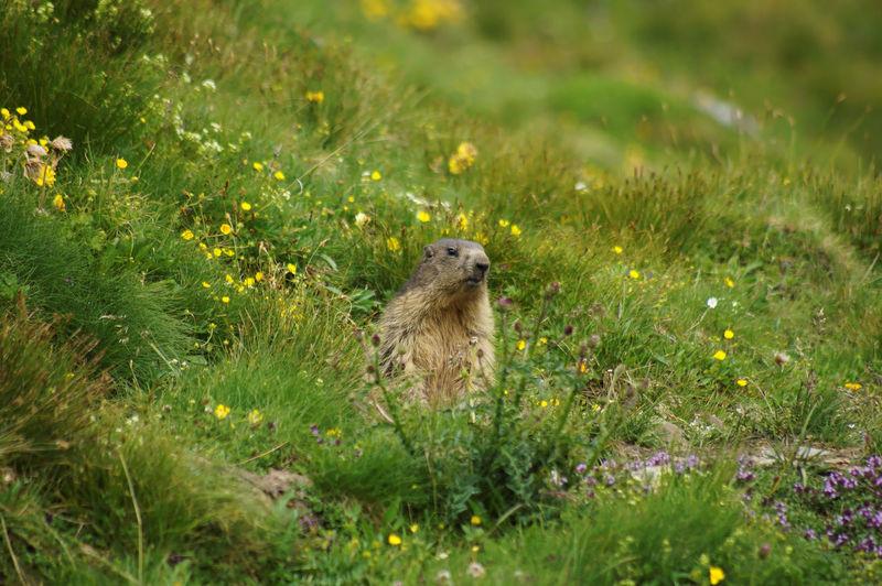 Prairie dog sitting on field