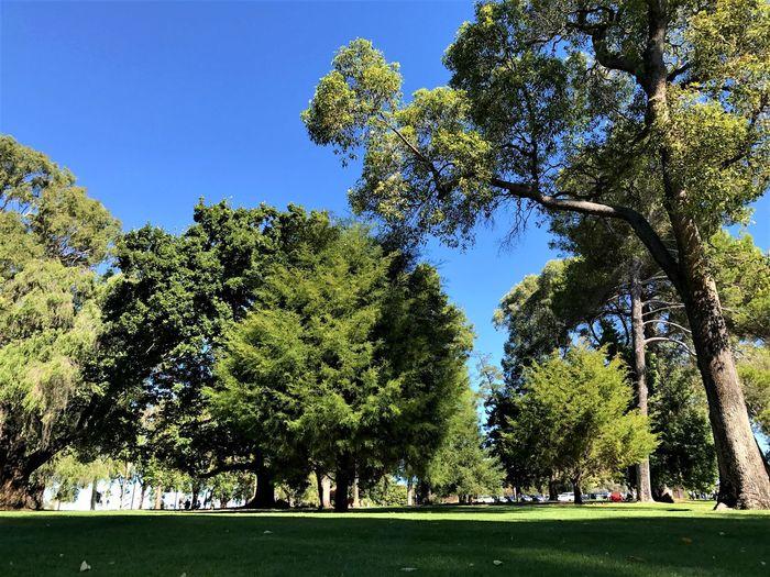 King's Park, Perth, Australia Australia Green King's Park King's Park, Perth, Australia Perth Trees Clear Sky Park Sunlight Tree