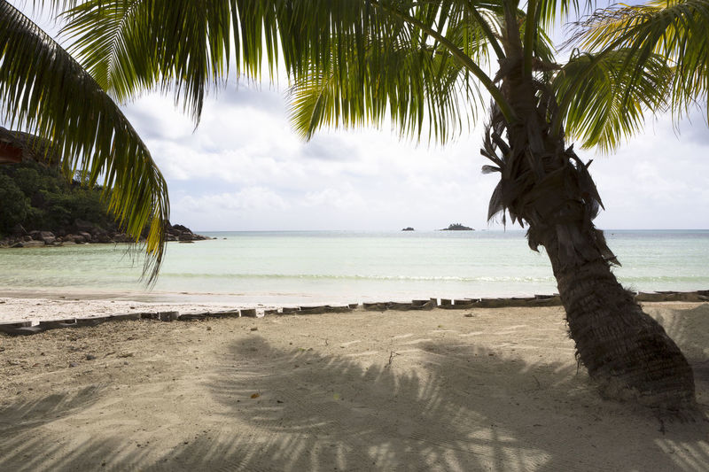 Water Sea Tree Beach Sky Palm Tree Tropical Climate Land Beauty In Nature Tranquility Tranquil Scene Horizon Over Water Plant Cloud - Sky Sand Nature Trunk No People Outdoors Palm Leaf Coconut Palm Tree Tropical Tree Praslin Praslin Seychelles Seychelles