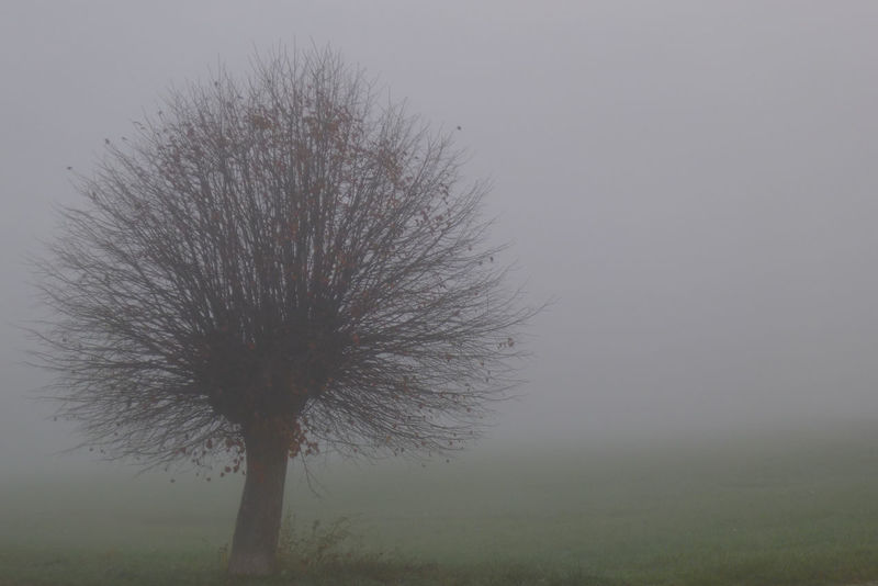 Lonesome ... Autumn EyeEm Nature Lover The Week On EyeEm Tree Bare Tree Beauty In Nature Day Fog Foggy Morning Fragility Grass Landscape Lonsome Misty Morning My Point Of View Nature No People Outdoors Tranquility