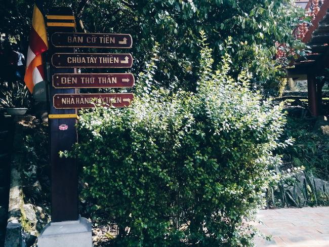 😊😊💖💖 To Travel Leafs First Eyeem Photo ở Tây Thiên Pagoda Vĩnh Phúc Vietnamese Beautiful