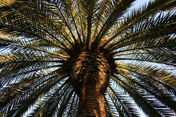 03/2016 Go Green Green Green Color Palm Palm Leaves Palm Tree Palm Tree Head Palm Tree Trunk Palm Trees Palmera Spanish Spring What I Like