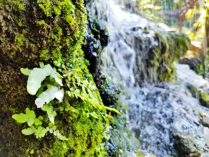 Fern and moss beside the waterfall Fern Wet Moisture Nature Natural Fresh Golden Water Tree Waterfall Motion Forest Close-up Moss Growing Lichen Rock Green Stone Blooming Plant Bark