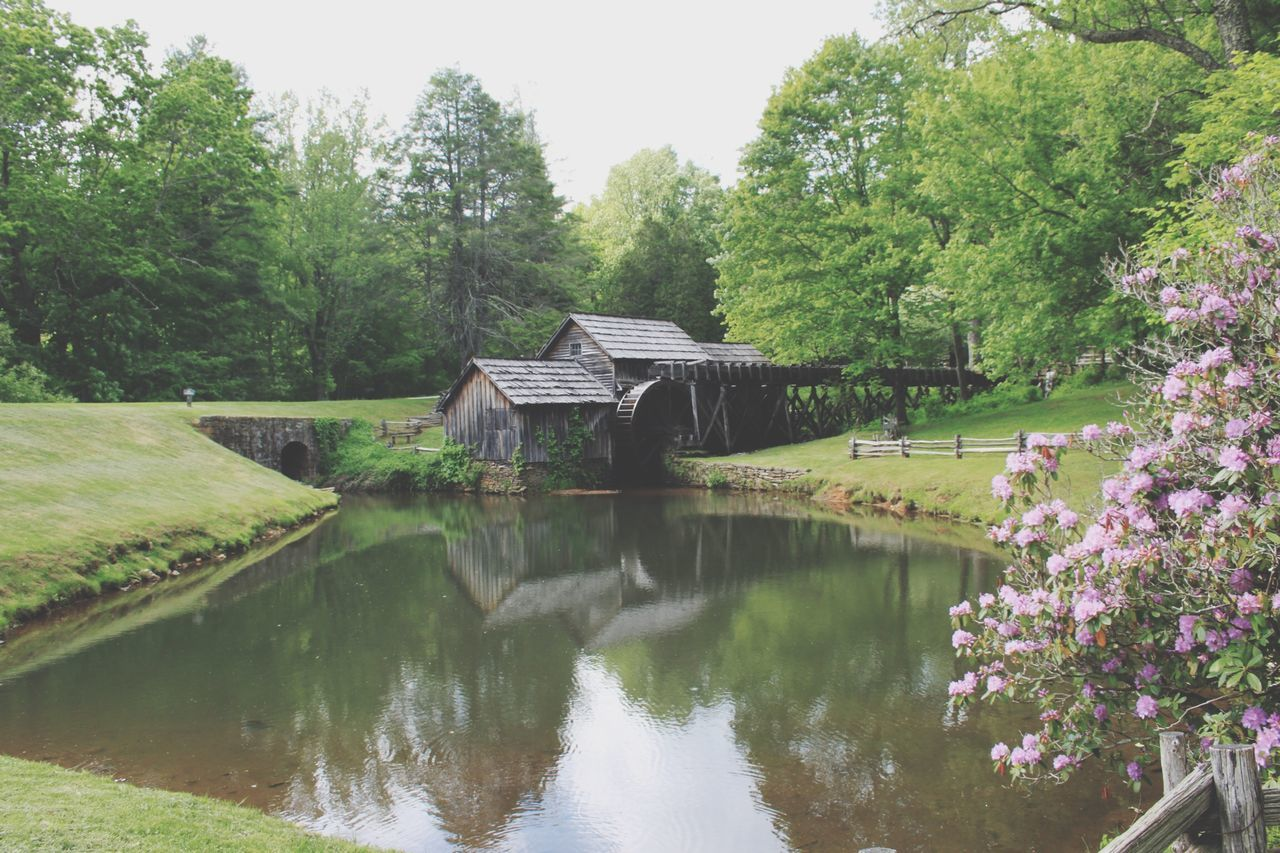 water, tree, built structure, beauty in nature, no people, nature, tranquility, day, growth, river, architecture, outdoors, covered bridge