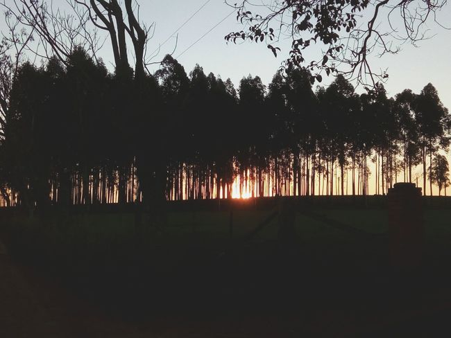 Caminata Misiones, Argentina Atardecer Tree Reflection Outdoors No People first eyeem photo