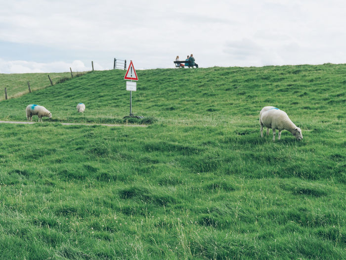 Sheep Grazing On Grassy Field Against Sky