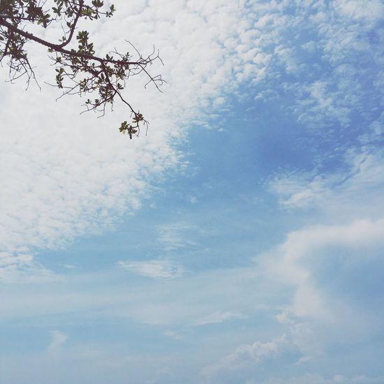 Blue Sky Cloud - Sky Tranquil Scene Cloudscape Minimalistic