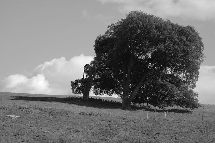 The Couple Beauty In Nature Black And White Blackandwhite Cloud - Sky Day Environment Field Grass Growth Horizon Over Land Isolated Land Landscape Nature No People Non-urban Scene Outdoors Plant Scenics - Nature Sky Tranquil Scene Tranquility Tree