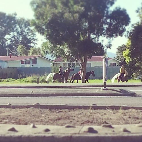Lil texicans play tiggy on da horses!! Simplethingsinlife Outside Makingthereownfun Notplayingplaystation Texicansforlife
