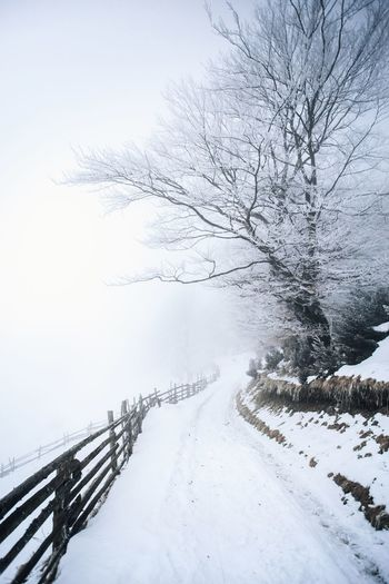 Tree Bare Tree Beauty In Nature Branch Cold Temperature Day Extreme Weather Fog Foggy Frozen Landscape Nature No People Outdoors Railing Scenics Sky Snow Snowing The Way Forward Tranquil Scene Tranquility Tree Weather Winter