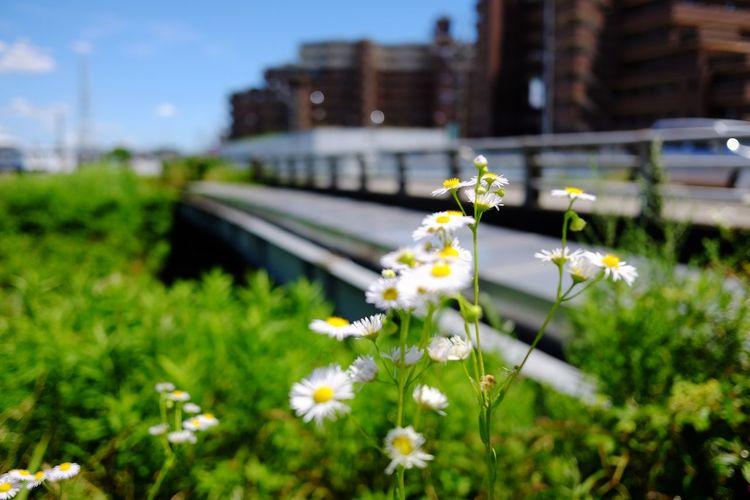あつい😵 Flower Head Flower City Greenhouse Springtime Flowerbed Close-up Architecture Sky Plant