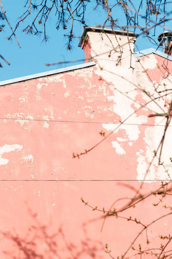 Architecture Building Exterior Built Structure Tree Low Angle View Pink Color Day Building Branch Plant Nature No People Sky Sunlight Wall - Building Feature House Outdoors Growth Clear Sky Wall Ruined