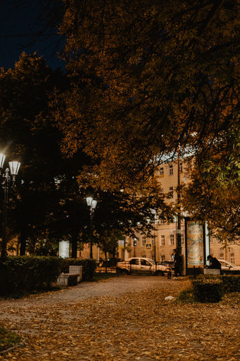 Street amidst trees and buildings at night