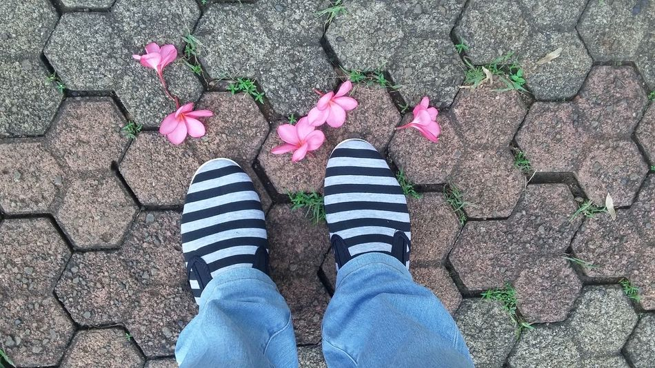 Pattern Pieces Comfortable Shoes My Feet Can Touch The Ground Frangipani Stone Blocks Flowers, Nature And Beauty ...it is in the morning on the way to work...