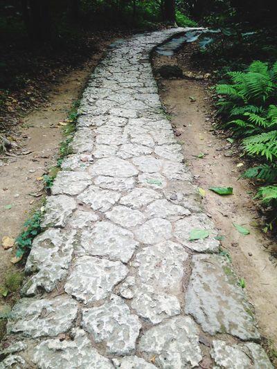 Sefa-utaki Sera-utaki Road Intothewoods Nature Hello World