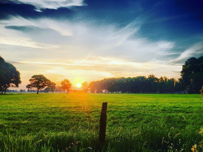 Sunrise or sunset in a blue and white sky over the trees lined behind a fresh green Meadow or farmfield showing the post and barbed wire of the fence Sky Beauty In Nature Plant Landscape Field Scenics - Nature Tranquil Scene Tree Green Color Nature Sunset Land Cloud - Sky Grass Growth Environment Tranquility Rural Scene Agriculture Sunlight