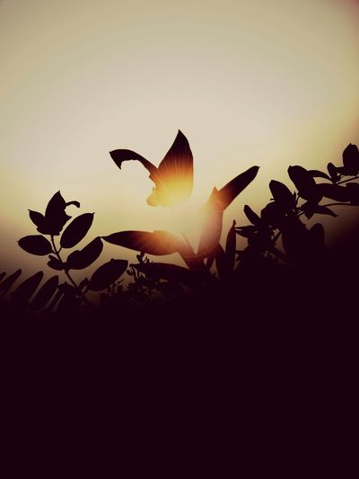 Enjoying Life Getting Inspired Beauty Light And Shadow Enjoying The Sun Nature Flowers Colourmehappy Sunset Silhouettes EyeEm Best Shots