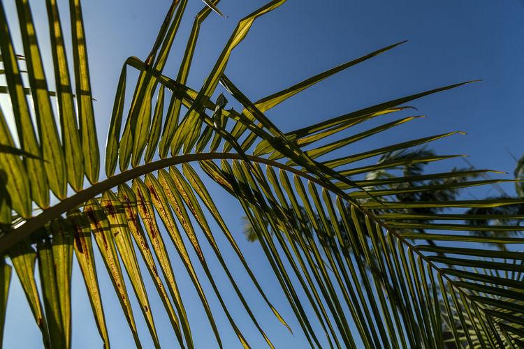 Summer Palms -
