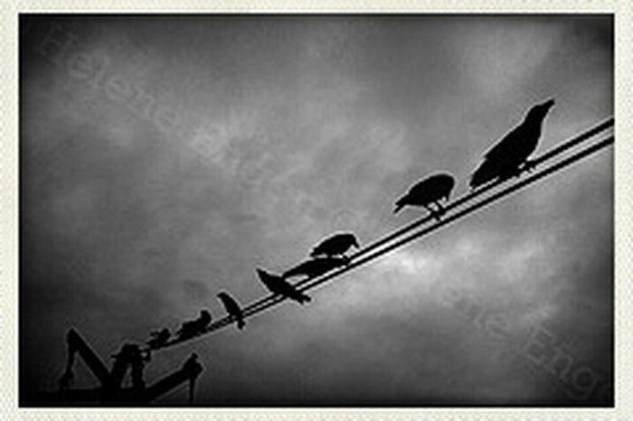 Blackandwhite Birds India Raven The Raven Edgar Allan Poe Nevermore