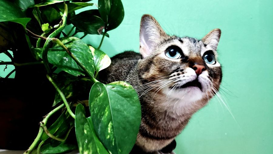 Cat behind of some plants in a green wall Cat Cat Lovers Cats Of EyeEm EyeEm Selects Pets Close-up Plant Life Growing Leaf Domestic Cat Feline Whisker Flower Head Petal Leaf Vein