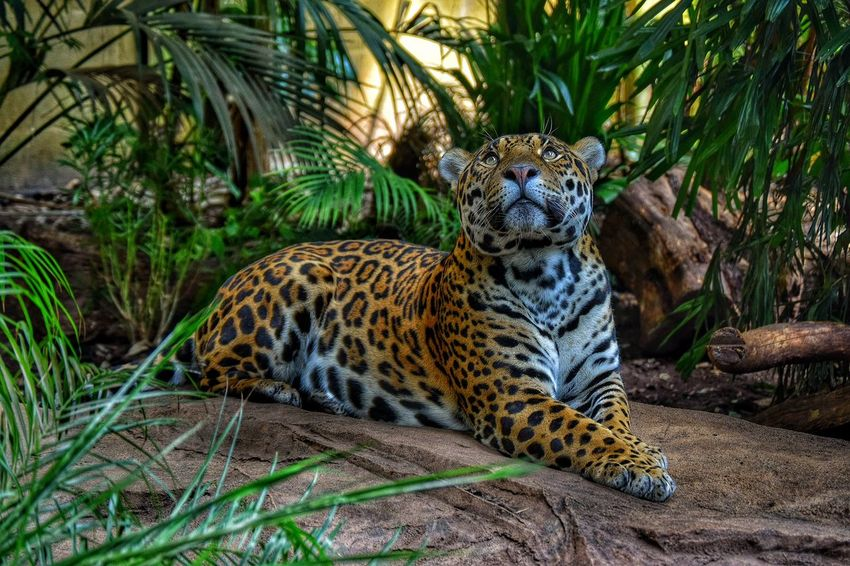 Taking Photos Relaxing Photography EyeEm Animal Lover Chester Zoo Animals
