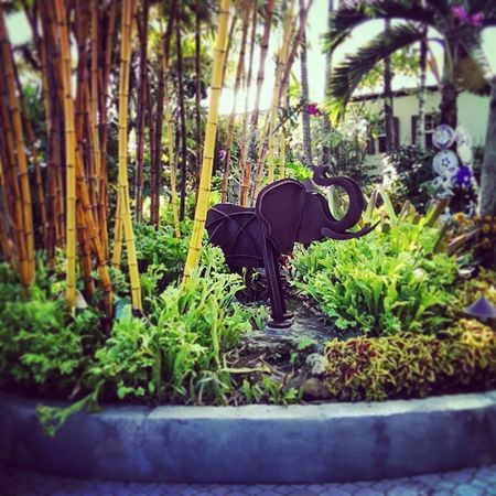 Elephant spotted in the McMansion Jungle Afternoonstroll Fortlauderdale lasolas instagoodlife picofday beautifulday