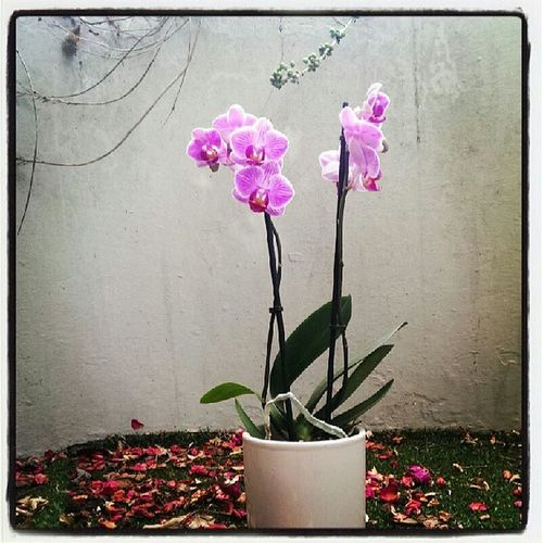 Our New Baby Flower orchidbeautiful