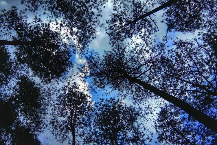 Tree Branch Backgrounds Forest Full Frame Silhouette Blue Sky Close-up Directly Below Treetop Upward View Bark Blue Color Yellow Color Long Shadow - Shadow Tree Trunk Tranquility Blooming Countryside Calm Tree Canopy  Spiral Staircase Growing Skylight Dense Cupola Single Tree Tranquil Scene