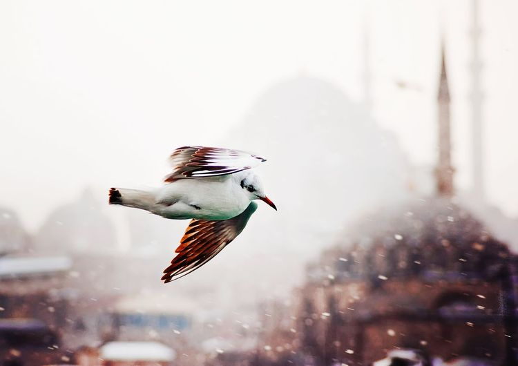 Close-Up Of Bird Flying In City During Snowfall