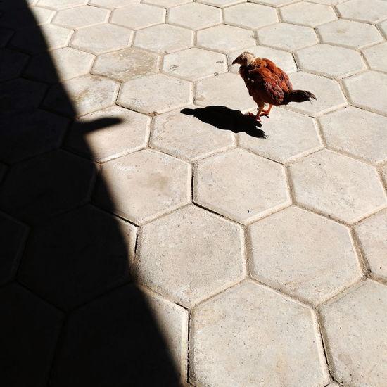 High angle view of bird on street