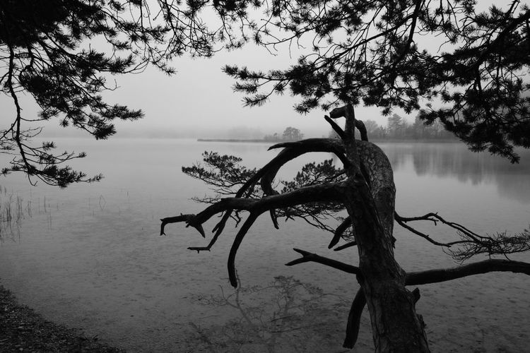 Blackandwhite Black And White B&w Tree Water Plant Tranquility Branch Beauty In Nature Lake Tranquil Scene Scenics - Nature Trunk Tree Trunk No People Nature Outdoors
