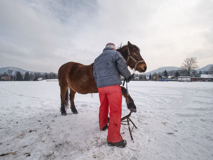 Farrier assistant keep horse with front leg on tripod. regular hoof check in winter on horse farm