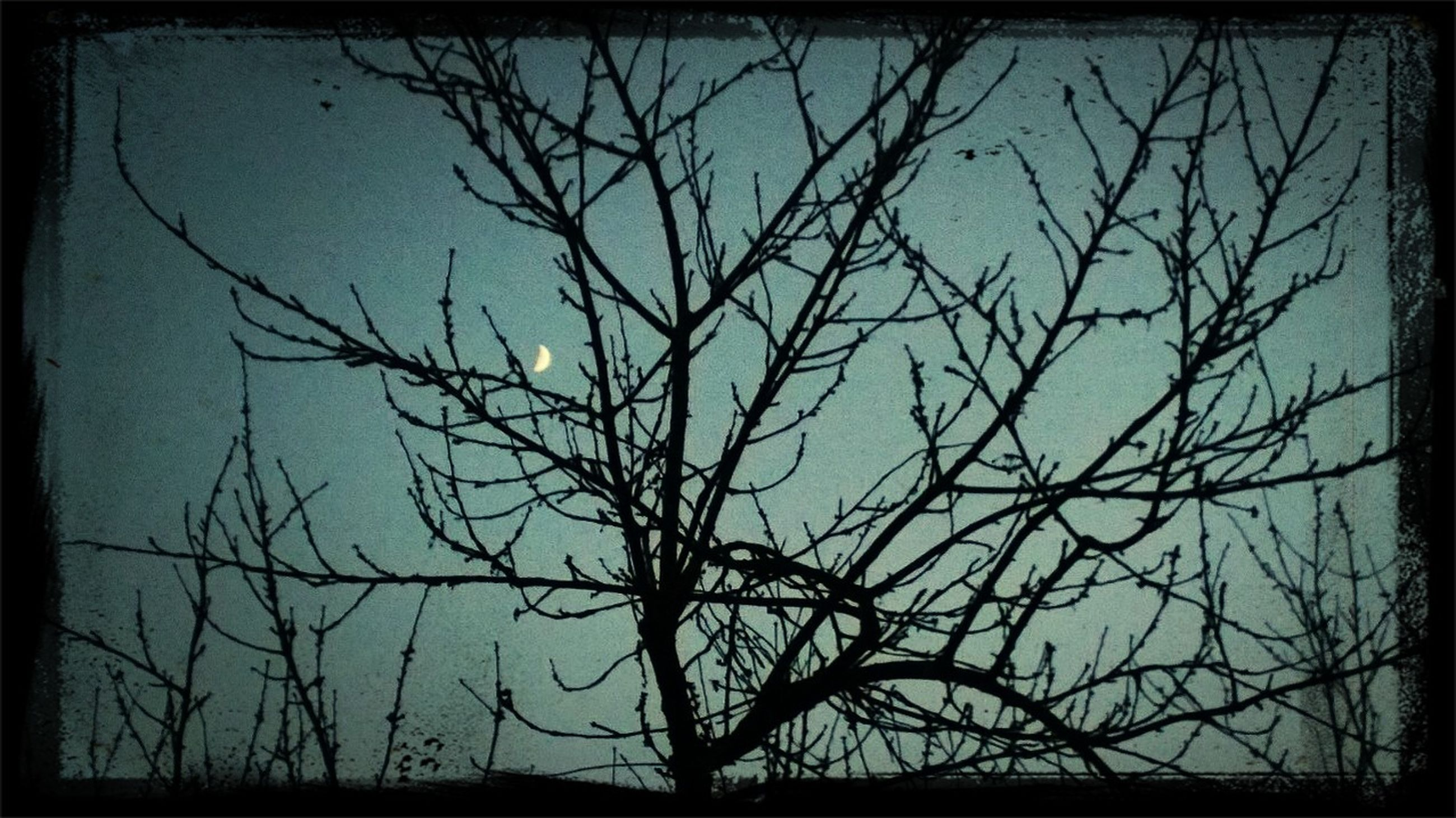 transfer print, bare tree, branch, tree, auto post production filter, silhouette, low angle view, tranquility, nature, sky, beauty in nature, scenics, clear sky, tranquil scene, outdoors, sunset, no people, dusk, growth, dead plant