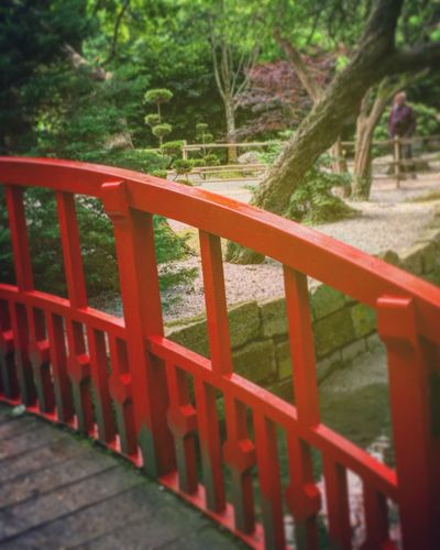 Bridge to Tranquility Railing Red Wood - Material Tree High Angle View Growth Green Color Plant Tranquility Wooden Branch Nature Outdoors Tranquil Scene Scenics No People The Way Forward Beauty In Nature Non-urban Scene
