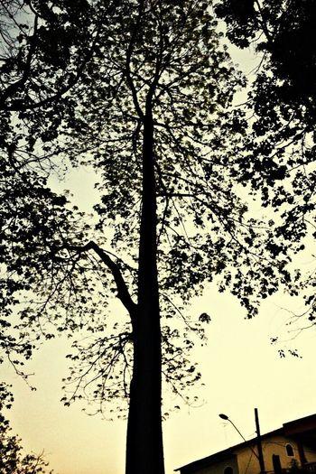 Tree Relaxing Flower Bealtiful Werer Is A Flower