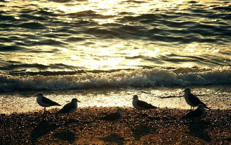 Landscape Seaside On The Beach