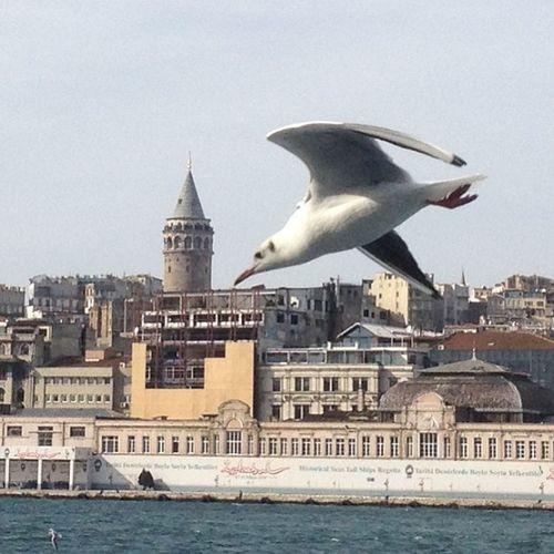 Seagull Galata Galata Tower Galatatower Martı Istanbul