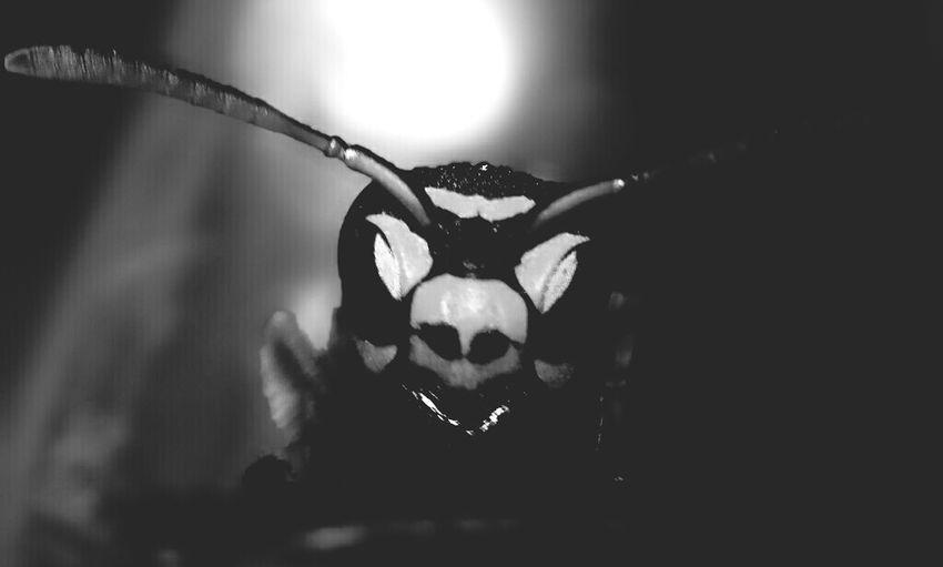 Macro_bugs Macro Monochrome Blackandwhite Macro Beauty Maximum Closeness Close Up Photography Close Up Shoot Naturephotography Macrophotography