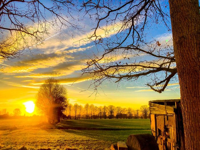 Dramatic and colorful sunset over an idyllic Countryside landscape with some bare trees, grassland and a shed in it Sunset Sky Tree Plant Nature Beauty In Nature Field Tranquil Scene Tranquility Scenics - Nature Growth Sunlight Landscape Cloud - Sky Land Idyllic Agriculture Orange Color Environment Sun