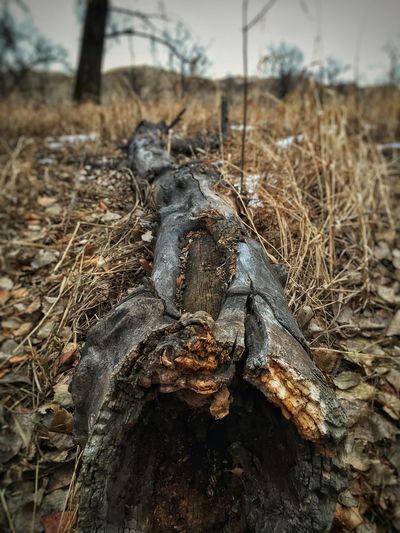 EyeEm Best Edits Iphonephotography Eyemphotography IPhoneography Alberta Canada Dry Grass Winter Lethbridge IPS2016Winter Winter Trees Iphonephotoacademy Winter Bushes Fallen Leaves Dead Tree