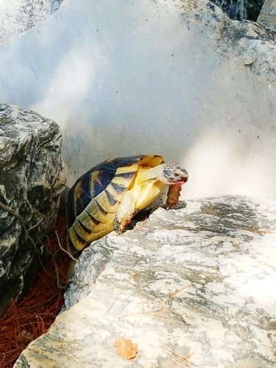 Turtle tur Atenas Animal Themes No People Reptile Crocodile Outdoors Multi Colored Original Experiences