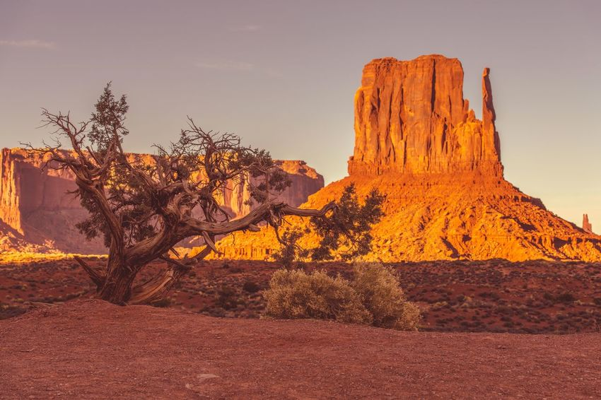 Monument Valley Northern Arizona Desert Landscape. United States of America. Arizona Desert Landscape_Collection Monument Valley Tribal Park Plant USA Utah Arid Climate Beauty In Nature Day Desert Landscape Nature No People Outdoors Scenics Sky Tranquility Travel Destinations Tree