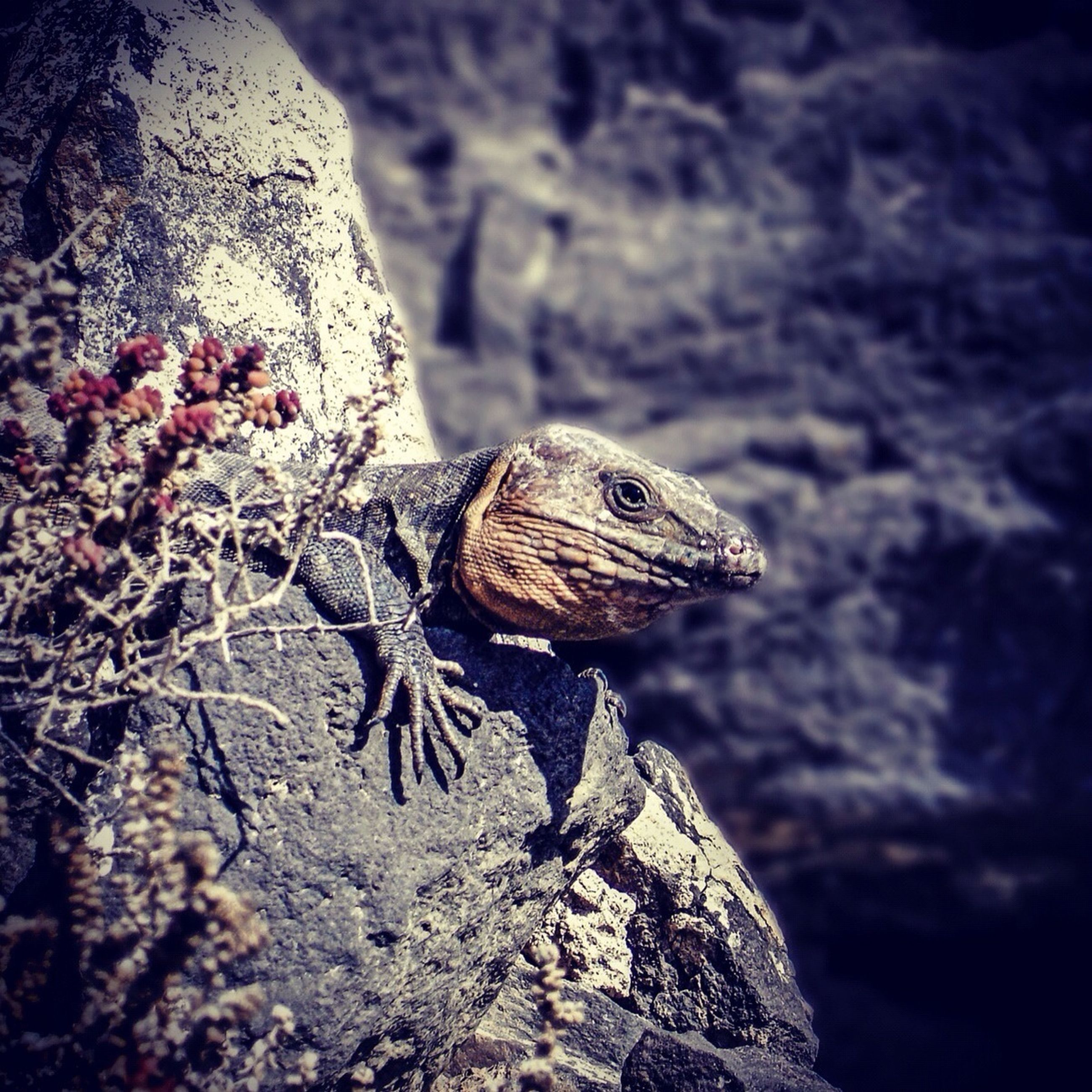 one animal, animal themes, animals in the wild, wildlife, lizard, reptile, close-up, focus on foreground, nature, side view, branch, outdoors, rock - object, day, beauty in nature, natural pattern, full length, selective focus, no people, tree