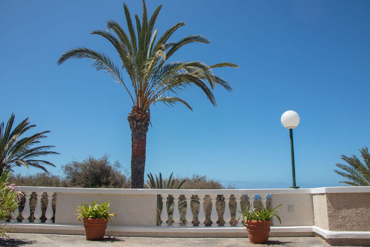 Palm tree against clear blue sky