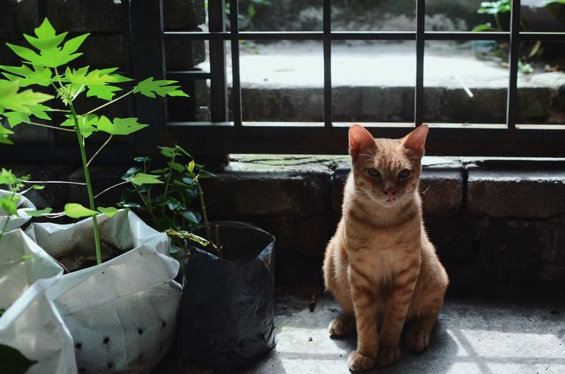 cats Mammal Pets Domestic One Animal Animal Themes Domestic Animals Animal Cat Domestic Cat Feline Window Potted Plant Vertebrate Plant Day No People Sitting Nature Looking Portrait
